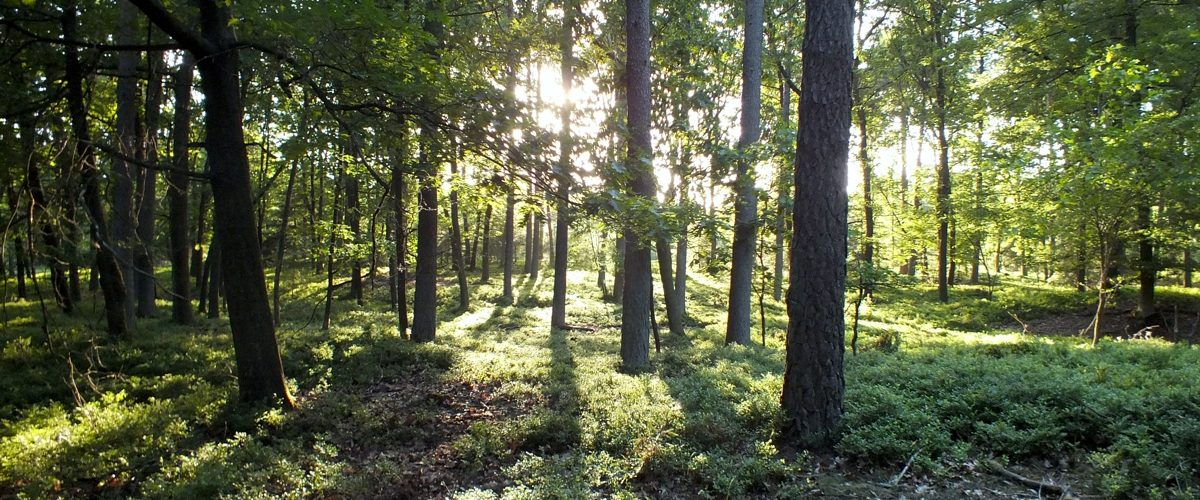 Heerlijk wandelen met ondergaande zon in het Lierderbos
