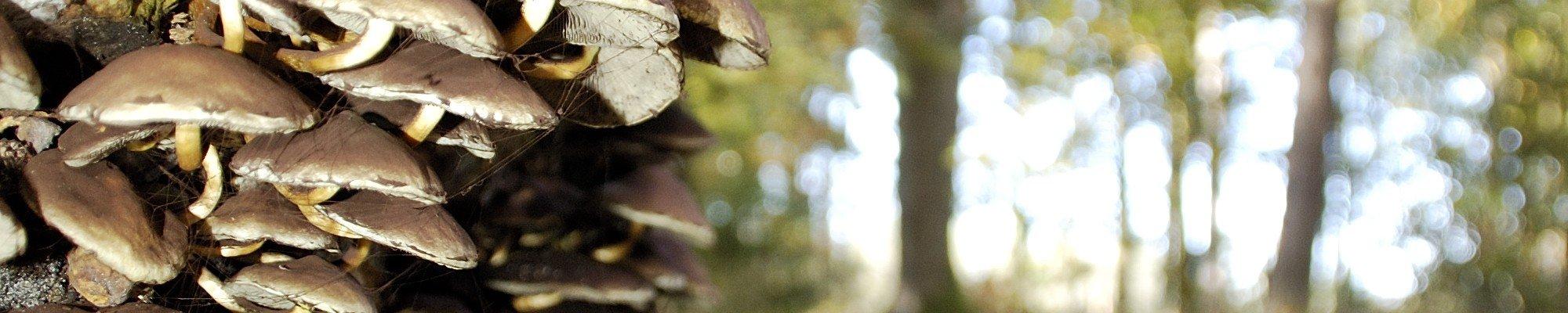 herfsttafereel in het Lierderbos